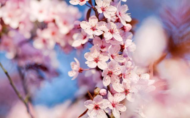 Flores de Inverno para Decoração de Casamento